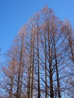 青空と木立ち