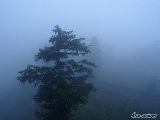 霧に覆われた道道588号線からの眺め
