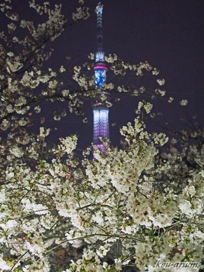 東京スカイツリーとサクラ